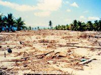 Tsunami NTT 1992
