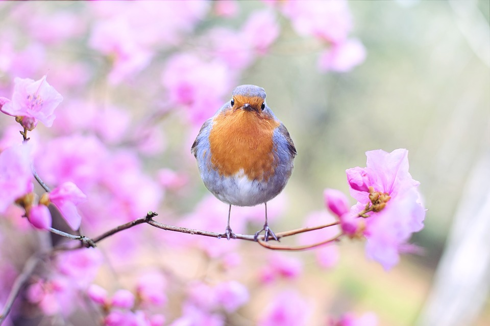 Pengicau; Gudangnya Informasi Mengenai Burung