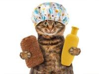grooming kucing terdekat